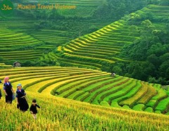 Hot Deal: Hanoi - Sapa - Halong Bay Muslim Tour 5D4N